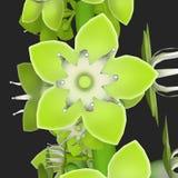 Coccoloba_Flower 库存照片