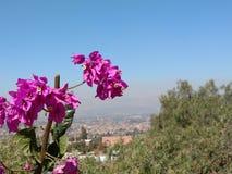 cochabamba Immagine Stock