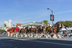 Coche del caballo de Budweiser hermoso en Rose Parade famosa Fotografía de archivo
