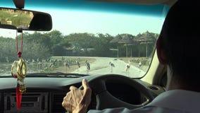coche del safari 4K, opinión el marabú africano y pájaros pintados de la cigüeña en el camino metrajes