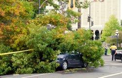 Coche destroed por un árbol caido Foto de archivo libre de regalías