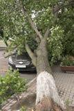 Coche destruido por un árbol caido en la calle Imágenes de archivo libres de regalías