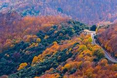 Coche que cruza un camino entre el bosque colorido de Montseny en Autu Foto de archivo libre de regalías