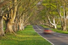 Coche rojo en la avenida de árboles Foto de archivo