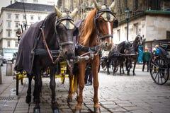 Coche tradicional Fiaker del caballo en Viena Austria Fotografía de archivo