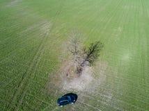 Coche verde del campo y árbol solo Imagen de archivo libre de regalías