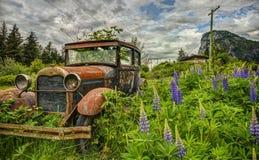 Coche viejo abandonado en campo púrpura del Lupine Fotografía de archivo libre de regalías