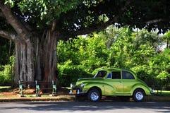 Coche y árbol Imagen de archivo libre de regalías