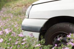 Coche y neumático blancos en campo de flor púrpura Fotografía de archivo libre de regalías
