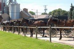 Cochecillos de Amish   Imágenes de archivo libres de regalías