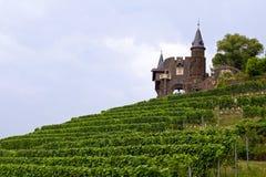 Cochem vingård med slotten Arkivbilder