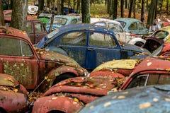 Coches antiguos del vintage - depósito de chatarra en otoño - Volkswagens abandonado - Pennsylvania fotos de archivo libres de regalías