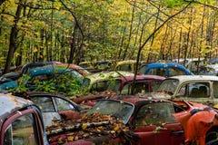 Coches antiguos del vintage - depósito de chatarra en otoño - Volkswagens abandonado - Pennsylvania foto de archivo