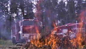 Coches de bomberos por el fuego Encienda las agujas del árbol peligrosas a la escena del bosque Resto activo inseguro en la natur almacen de metraje de vídeo