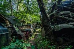 coches en un bosque fotos de archivo libres de regalías