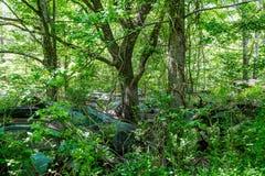 Coches rotos en árboles Fotos de archivo