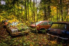 Coches y colores del otoño en un depósito de chatarra Foto de archivo