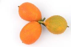 Cochinchinensis del Momordica, un aislante asiático suroriental de la fruta en blanco Foto de archivo