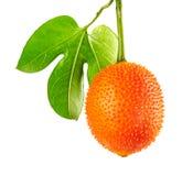 Cochinchinensis Momordica Gac при листья, плодоовощ Gac или джекфрут младенца изолированные на белой предпосылке с путем клиппиро Стоковые Фото