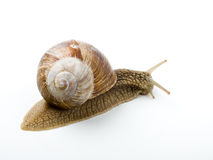 Cochlea Royalty Free Stock Photography