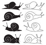 Cochlea. The figure shows a snail Royalty Free Stock Image