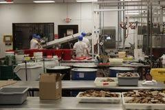 Cocina de la fábrica del caramelo de Ethel M Chocolate Imagenes de archivo