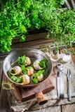 Cocinar caracoles con mantequilla de ajo Imágenes de archivo libres de regalías