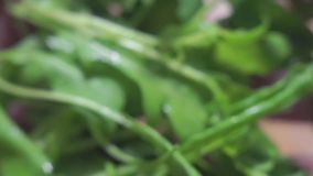 Cocinar la ensalada del arugula y del pepino almacen de video