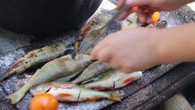 Cocinar pescados en la parrilla almacen de metraje de vídeo