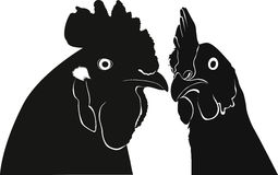 Cock bird head isolated Stock Image