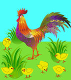 Cock and  chicken in the meadow. Vector picture. Royalty Free Stock Photography
