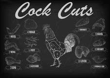 Cock cockerel rooster cutting meat scheme parts carcass brisket Stock Images