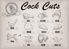 Cock cockerel rooster cutting meat scheme parts carcass brisket Royalty Free Stock Image