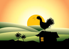 Cock crows in the morning Stock Image