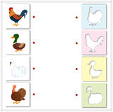 Cock, drake, gobbler and swan. Educational game for kids Royalty Free Stock Photography