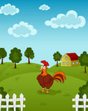 Cock on farm. Illustration of funny chicken standing on the farm meadow Royalty Free Stock Images