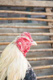 . And hen in the countryside its sleeping stock images