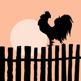 Cock on old fence. Silhouette of the cock on old fence Stock Photography