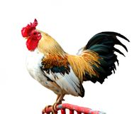 Cock Stock Images