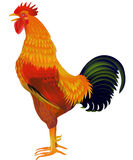 Cock the symbol of 2017 Royalty Free Stock Photos