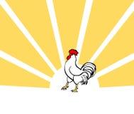 Cock, vector bird card. Morning poster vector illustration