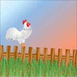 The cock welcomes sunrise Royalty Free Stock Images