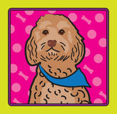 Cockapoo Cartoon Stock Photos