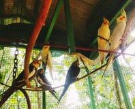 Cockatiel cage royalty free stock photos