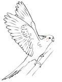 Cockatiel del loro del vuelo Foto de archivo libre de regalías