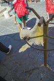 Cockatoo και παπαγάλος στην παλαιά πόλη της Ρόδου Στοκ φωτογραφία με δικαίωμα ελεύθερης χρήσης