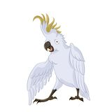 Cockatoo, Royalty Free Stock Photo