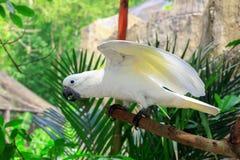 cockatoo Стоковое Фото