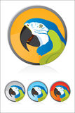 Cockatoo. Vector Cockatoo illustration icon Cartoon Vector Illustration