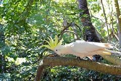 cockatoo imagen de archivo libre de regalías